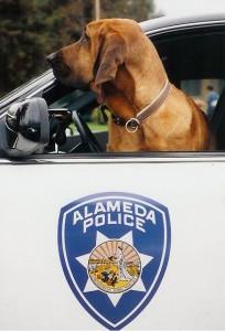 Ronin Alameda Police